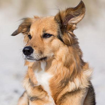 Lübecks Hunde - Emma